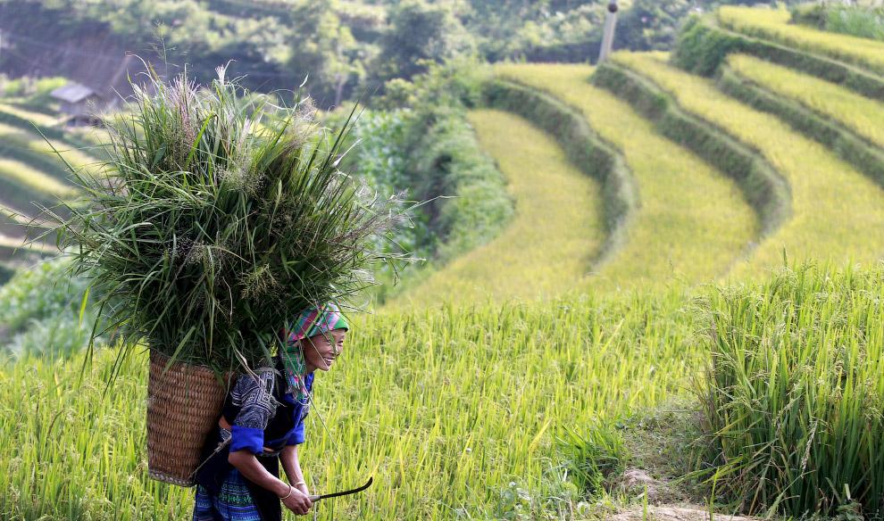 Coltivazioni Thailandia