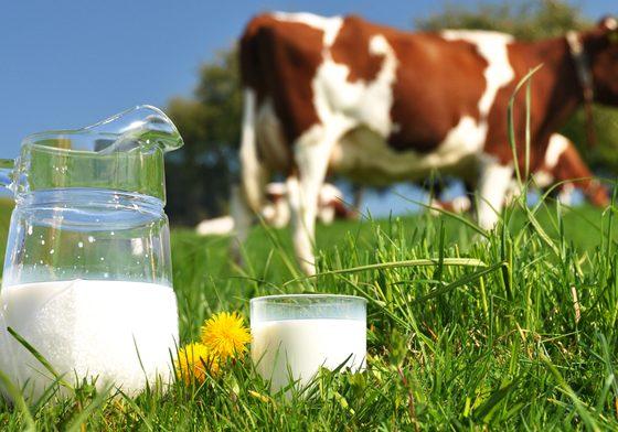 latte-crudo-e-pastorizzato
